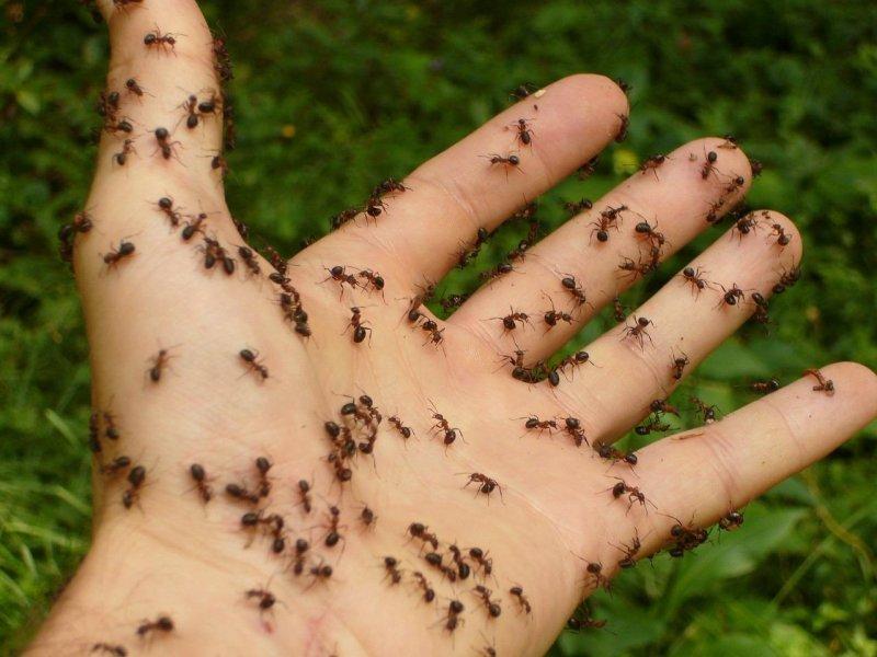ants-4239_12803.jpg