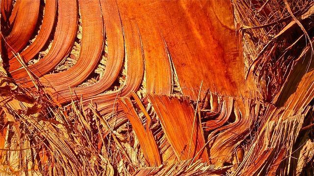 tree-246919_640.jpg