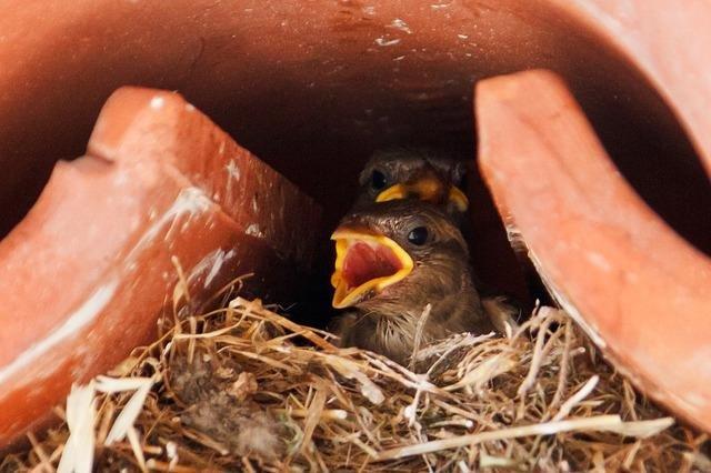 sparrow-18215_640.jpg