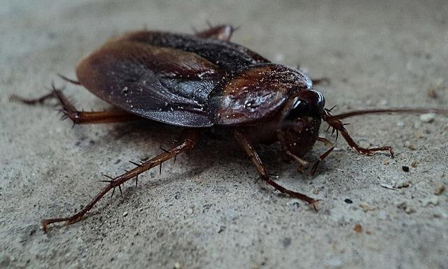 cockroach-70295_640.jpg