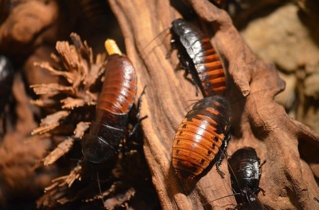 cucarachas2.jpg