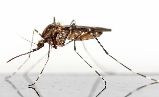 mosquito-83639_640.jpg