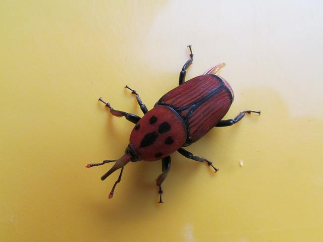 beetle-242356_640.jpg