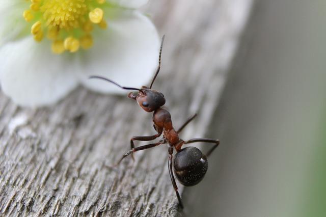 ant-954015_640.jpg