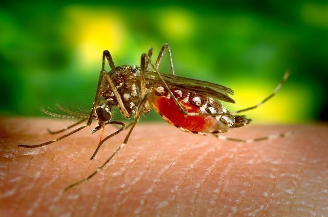 mosquito-542156_640.jpg