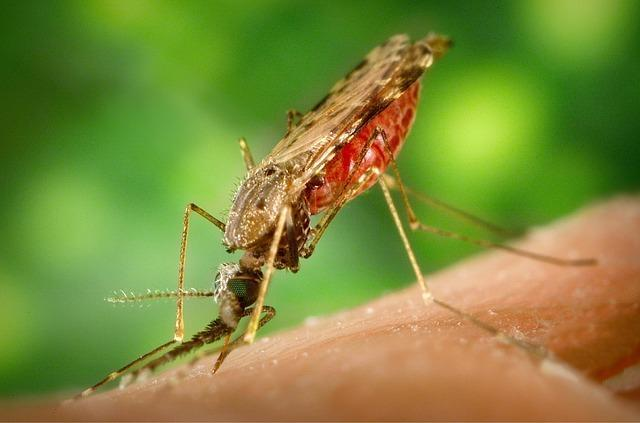 mosquito-1016254_640.jpg