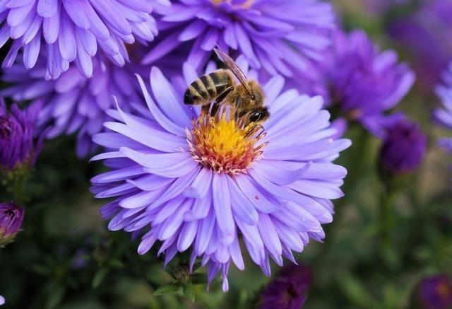 bee-flower-pollen-color-65656.jpg