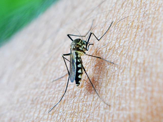 mosquito-213806_640.jpg