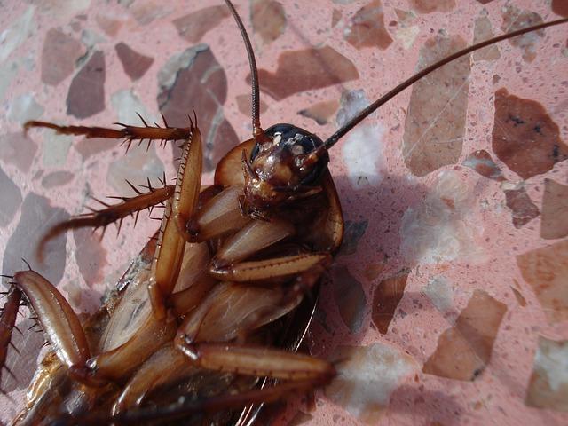 cucarachas1.jpg