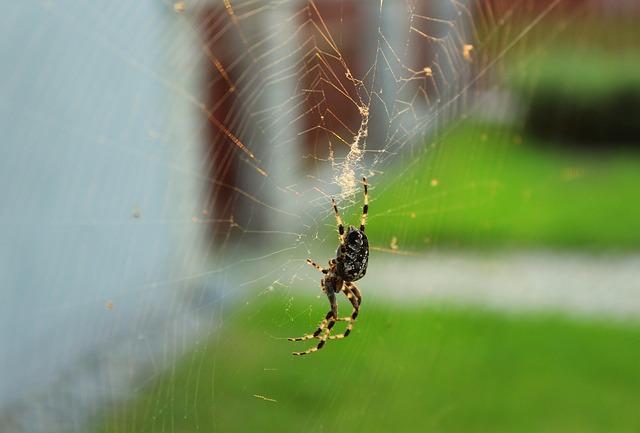 spider-3689584_640.jpg