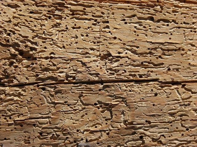 wood-1682101_640.jpg