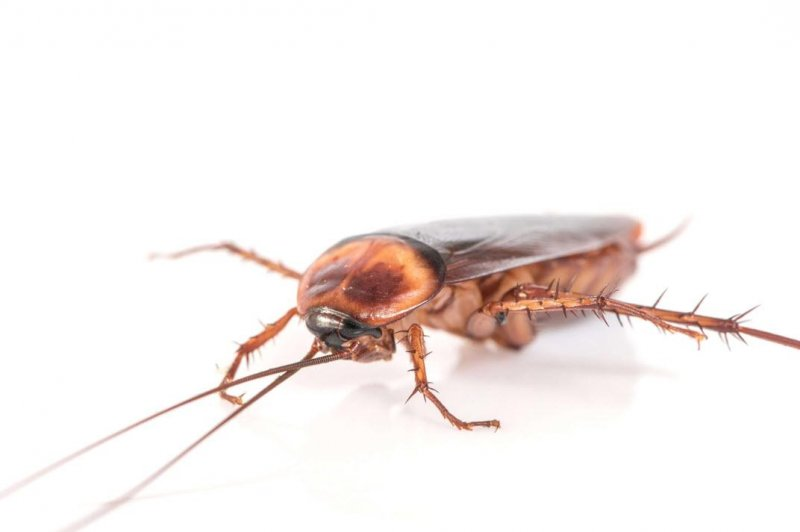 cucaracha.jpg