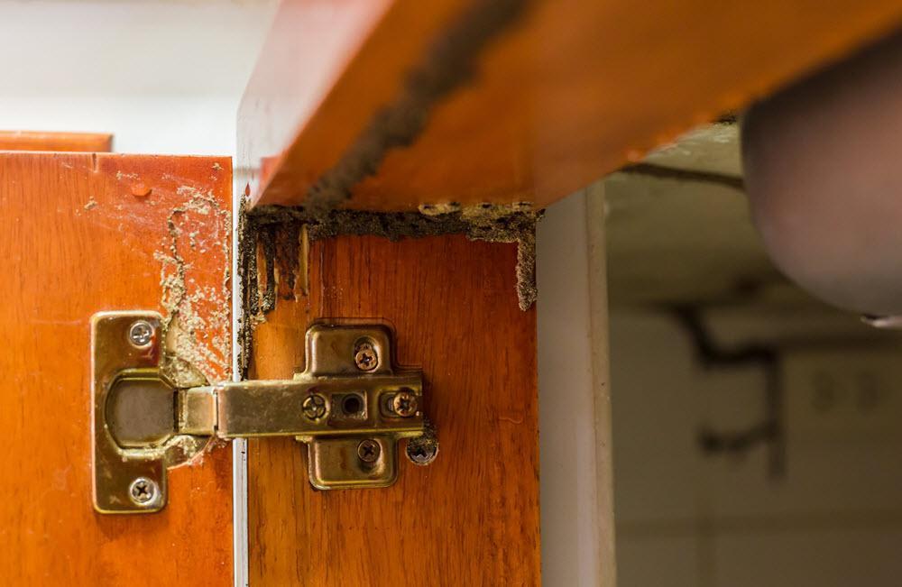 termitas puerta.jpg