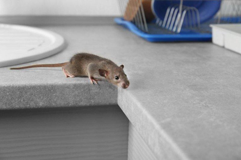 ratones casa.jpg