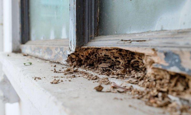ventana termita.jpg